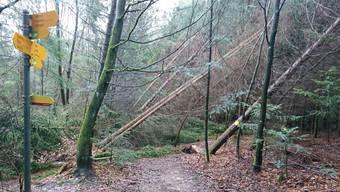 An vielen Orten blockieren umgestürzte Bäume noch die Wanderwege.