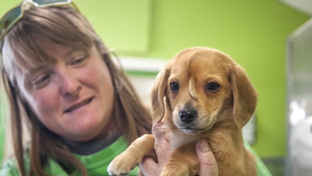 Dem 10-wöchigen Hundebaby wächst eine Art Schwänzchen aus der Stirn.