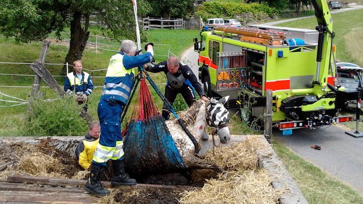 Ein verunfalltes Pferd wird von den Tierrettern sorgfältig aus einer Güllengrube gehievt. zvg