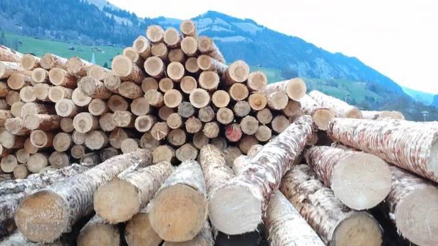 Sturm-Holz überlastet Sägewerke