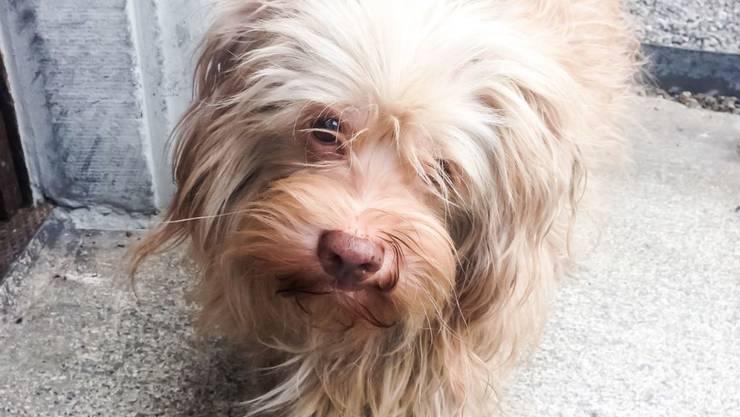 """Der entführte blinde Hund """"Jack"""" wurde von der Polizei aufgespürt."""