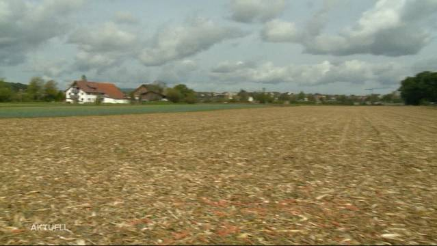 In Oberglatt wird in einem Feld ein Toter entdeckt. Nun wird ermittelt, ob es sich dabei um eine vermisste Frau handelt.