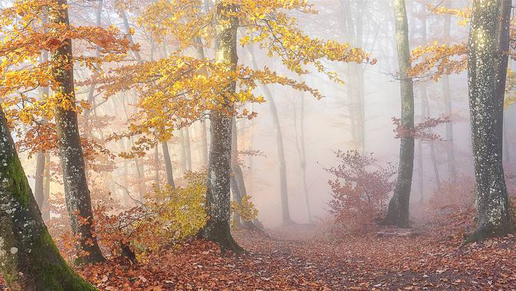 Diese Aufnahme von Oliver Wehrli entstand im Aargau – das Bild ist nun dank des «Mist&Fog Award» international bekannt.