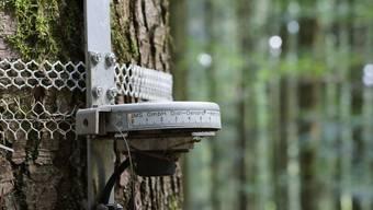 Für eine europaweite Studie sammelten Forschende unter anderem Daten zu Baumumfang und Stickstoffeintrag aus der Luft.