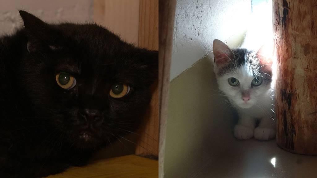 Cooper, Willow & Casimir - Wilde & halbwilde Katzen