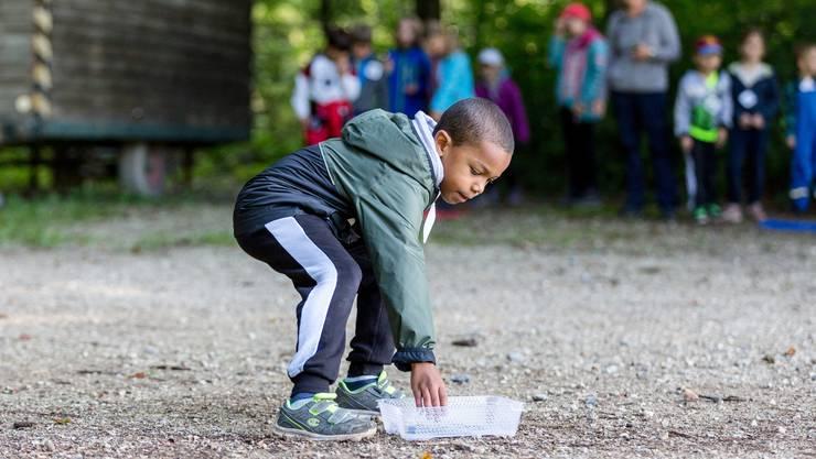 Der Stadtrat muss nun prüfen, wie in allen sieben Schulkreisen gewisse Kindergartenklassen nach dem Prinzip des Waldkindergartens geführt werden können. (Archivbild)