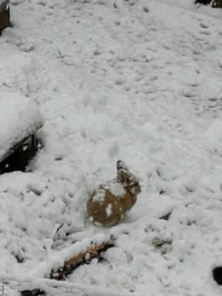 Auch Hasen geniessen den Schnee.
