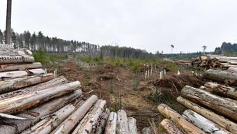 Ein Bild der Verwüstung: Das Gebiet Stelli in Kestenholz ein Jahr nach Burglind.