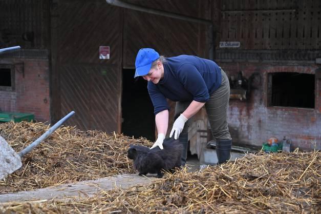 Auch das «Büsi» schaut der Bäuerin gerne bei der Arbeit zu.