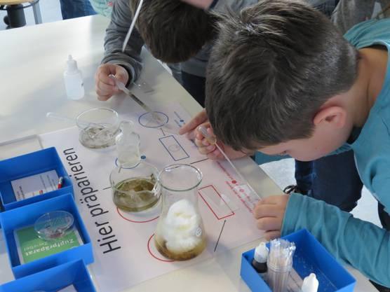 Homeschooling für Fortgeschrittene  mit  Versuchslabor bei Schneiders