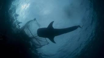 Von wegen nachhaltige Fischerei: Fair-Fisch-Label MSC massiv in der Kritik