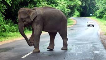Ein wilder Elefant beim Überqueren einer Strasse. (Symbolbild)