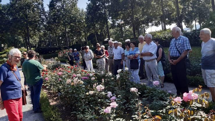 Die Senioren betrachten die verschiedenen Rosenarten.