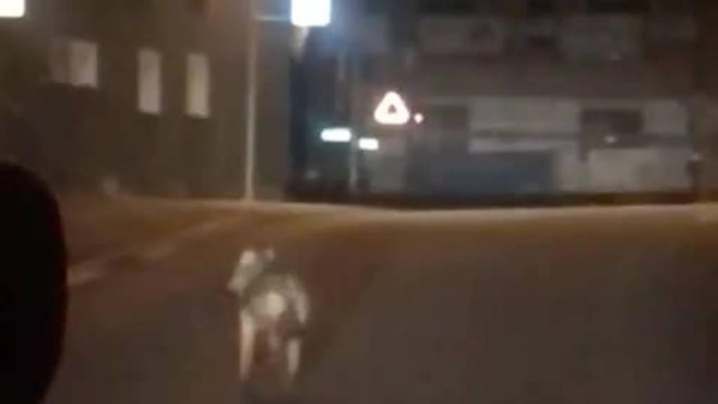 Video zeigt, wie Wolf mitten durch Speicher spaziert