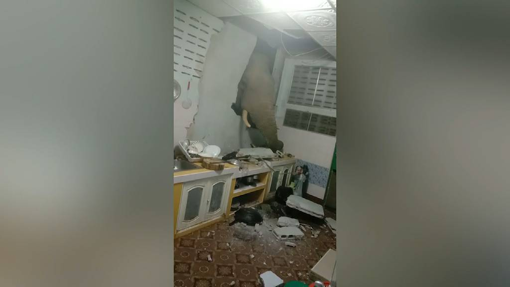 Zweimal in einem Monat: Hungriger Elefant durchbricht erneut Küchenwand