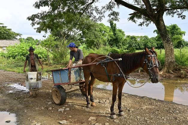 Die unter Denkmalschutz stehende Ortschaft Valle de Vinales, lockt mit seiner einzigartigen Landschaft; hier ist ein Bauer mit seiner Pferdekutsche unterwegs.