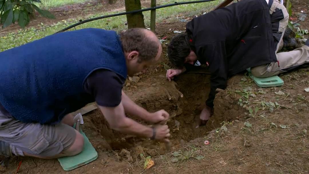 Tausende antike Münzen: Einer der grössten römischen Schätze der Schweiz im Kanton Aargau gefunden