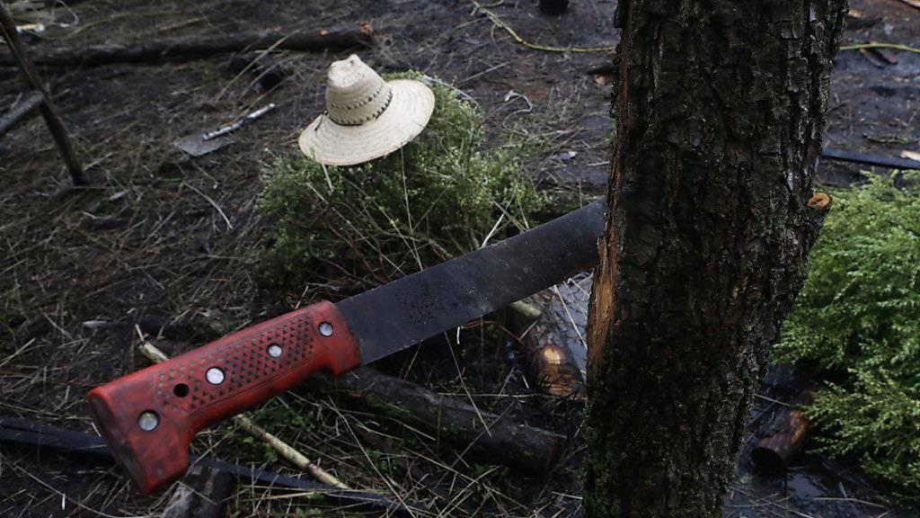 Machete, wie sie bei Farmarbeiten in Mexiko verwendet wird. (Symbolbild)