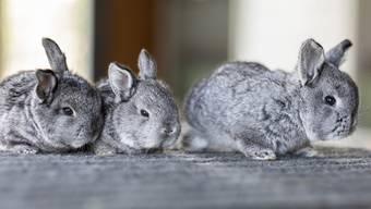 Oster-Glück bei den Bözer Kaninchen