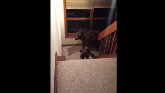 Ganz schön ungeheuer: Die Bärenfamilie im Treppenhaus.