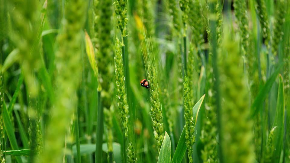Auch die Schweiz ist vom Artensterben betroffen