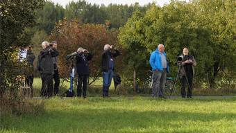 EuroBirdwatch 2015 Riehen