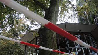 Wegen Wassermangels hat diese Rotbuche im Sommer bereits zwei Astgabeln abgeworfen. Rechts oben ist noch der Stumpf erkennbar.