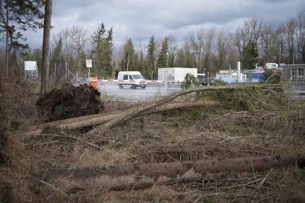 Bäume sind neben der Autobahn A6 zwischen Bern und Thun vom Sturm Burglind umgeweht worden.