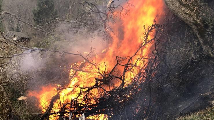 Entsorgte Asche führte zu Brandausbruch und erfordert Feuerwehreinsatz.