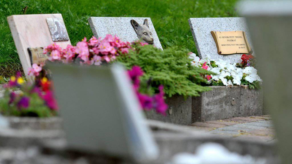 Mensch-Tier-Grab: Stadt St.Gallen nicht abgeneigt
