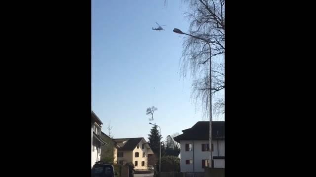 Baumfällen in Derendingen: Der Helikopter holt marode Bäume aus dem Quartier