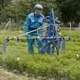 In der Schweiz werden immer weniger Pflanzenschutzmittel verkauft. (Archivbild)