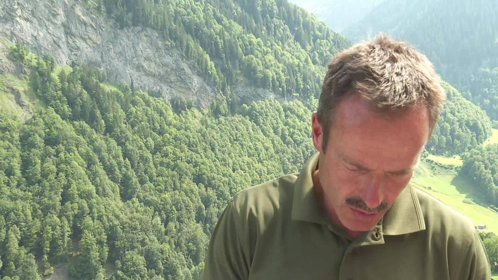 Wolfrisse im Sarganserland: Wildhüter untersucht tote Schafe