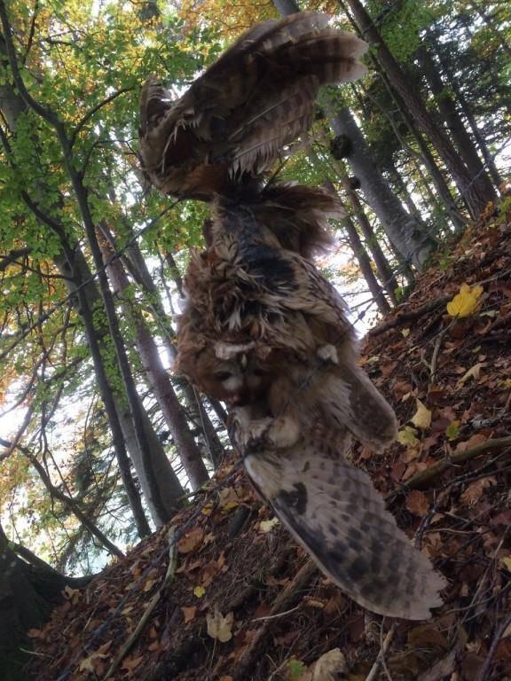 Solche Szenarien wollen die St.Galler Jäger und Naturschützer verhindern. (Bild: Roger Cincera/ stopp-tierleid.ch