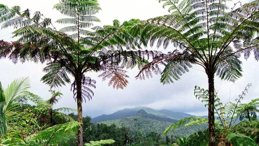 Tropische Regenwälder beherbergen eine einzigartige Artenvielfalt. Verglichen mit den Tropenwälder Afrikas sind die Wälder Südamerikas und Südostasiens besonders artenreich.
