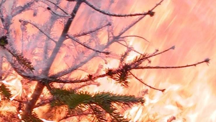 Dürre Christbäume brennen rasch lichterloh. AZ Archiv