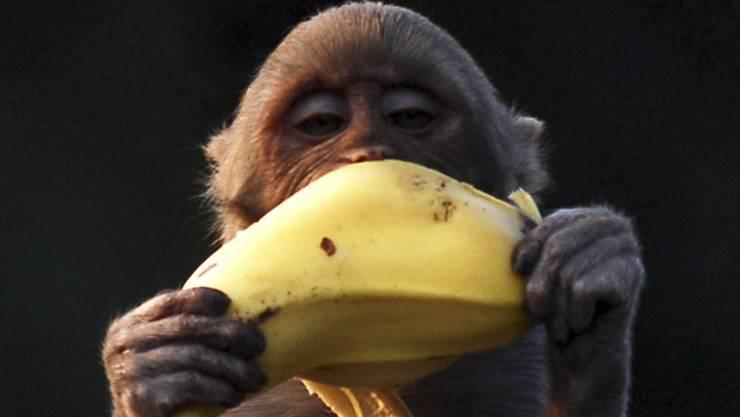 Ich habe meine Bananen trotzdem mit gutem Gefühl gekauft, obwohl ich keinen Affen zu Hause habe