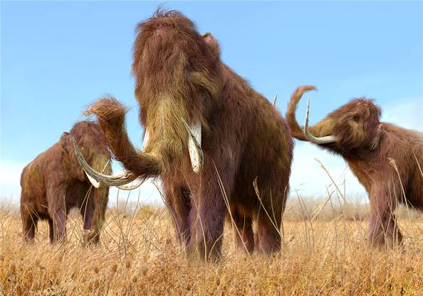 Wie lange bleiben Mammuts noch ausgestorben?