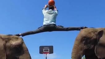 Diese Videos gehen viral: Ein Deutscher zeigt seine Basketball-Tricks mit Elefanten-Hilfe.