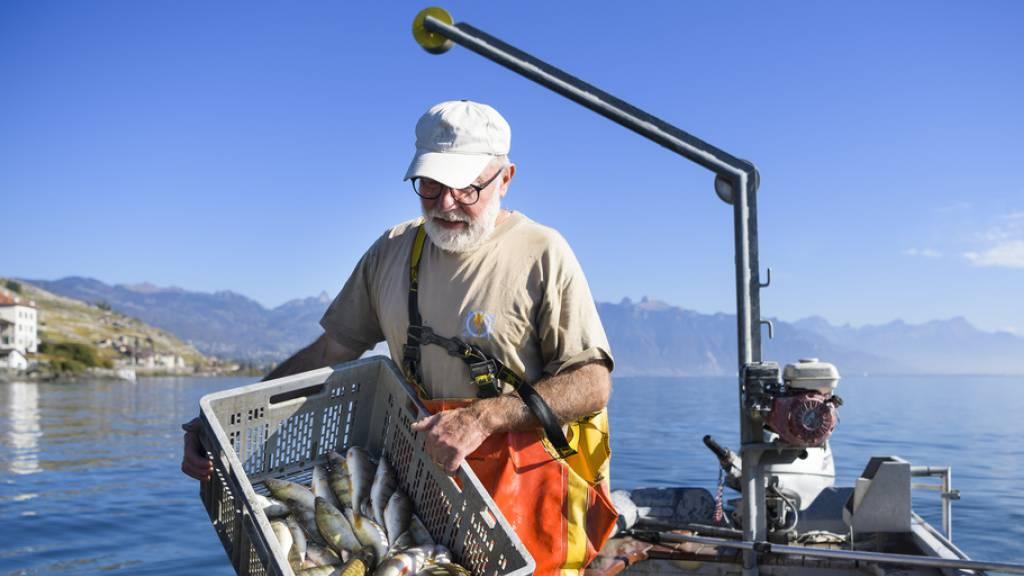 Fischereiertrag im Genfersee erneut deutlich gesunken