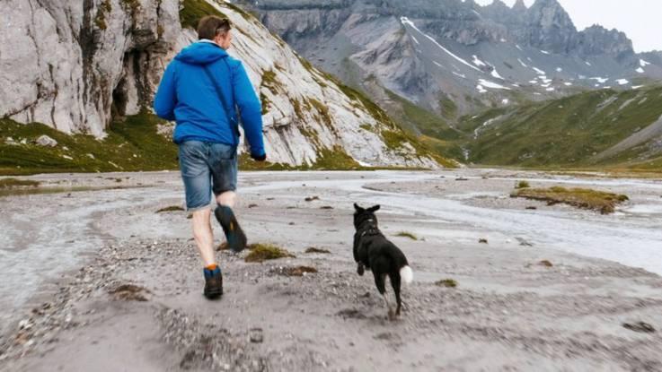 Eine Aargauer Hunde-Geschichte – Auf den Spuren eines rumänischen Strassenhundes