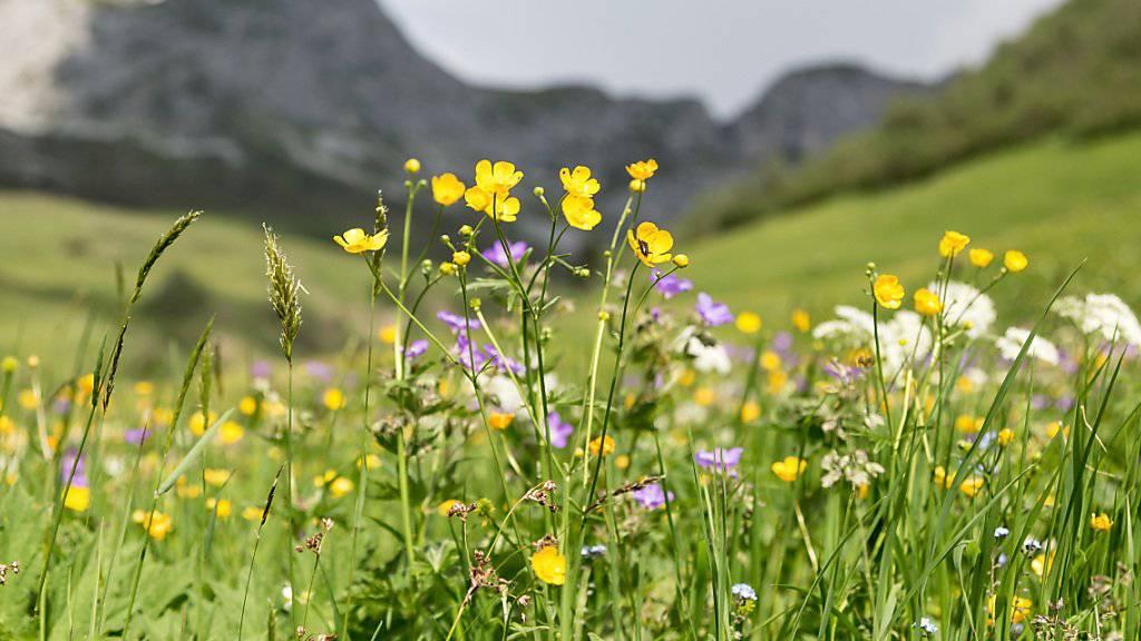 Artenreiche Landschaften sind produktiver und robuster