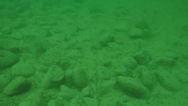 Eine Reihe von rund 100 Steinhügeln verläuft unter Wasser parallel zum Ufer und wurde von Menschen errichtet. (Amt für Archäologie des Kantons Thurgau)