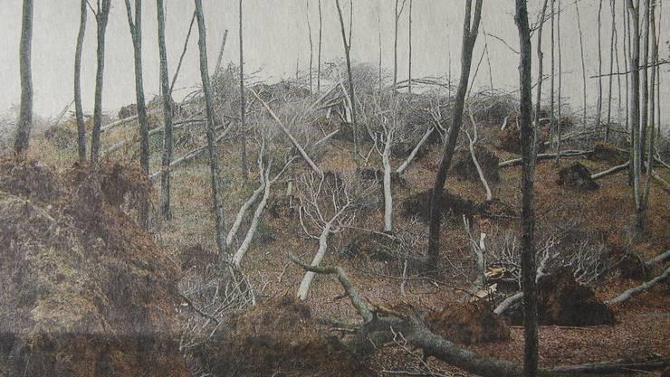 """Am 26. Dezember 1999 zog der Orkan """"Lothar"""" über die Schweiz. Er fällte auch im Aargau zahlreiche Bäume, wie hier im Buchwald bei Sarmenstorf."""