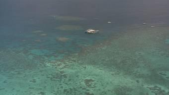 Riff bei Port Douglas in Australien (Archiv)
