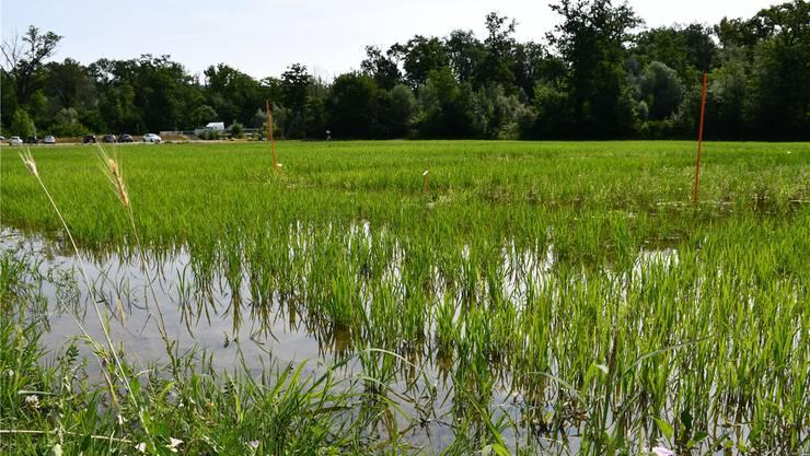 Rund 12000 Quadratmeter gross ist die Fläche, die hin und wieder auf natürliche Weise überschwemmt wird.
