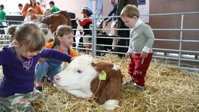 Tiere zum Anfassen am Event des Bauernverbands.