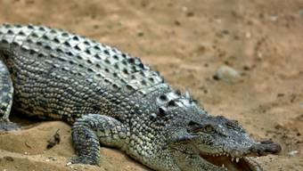 Ein Krokodil hat einen Knaben gefressen (Symbolbild)