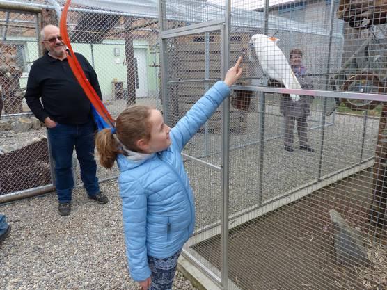 Vogelpark Ambigua in Zeihen startet in die vierte Saison: Eine etwas erschwerte Kontaktaufnahme.