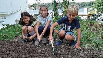 Sie steigen als erste im Aargau ins Beet